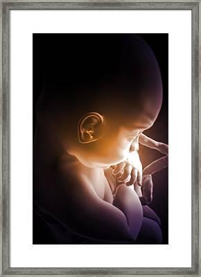 Embryonic Development Framed Print by MedicalRF.com