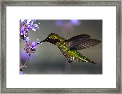 Emerald Beauty Framed Print