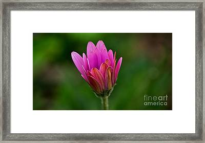 Emergence Framed Print by Julie Clements