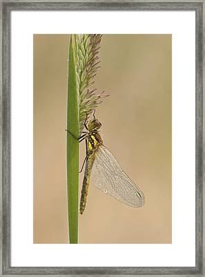 Emergent Framed Print by Andy Astbury