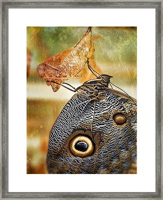 Emergent Culture Framed Print by Skip Hunt