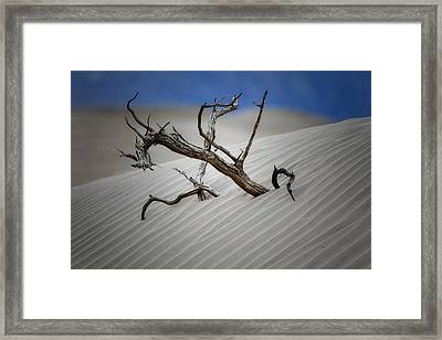 Emerging Tree Framed Print by George Oze