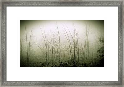Emerson Bog At Dawn Framed Print by Mike Greco