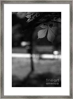 Empty Bench Framed Print by Dariusz Gudowicz