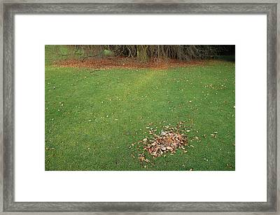 Empty Lawn With A Little Heap Of Leaves Scraped Together Framed Print by Matthias Hauser