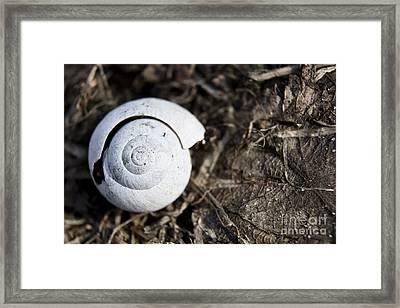 Empty Shell Framed Print by Agnieszka Kubica