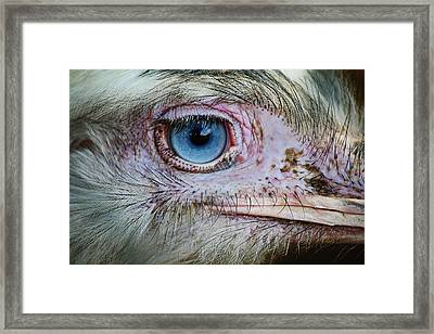 Emu Eye Framed Print by Paulette Thomas