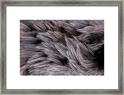 Emu Feathers Framed Print by Hakon Soreide