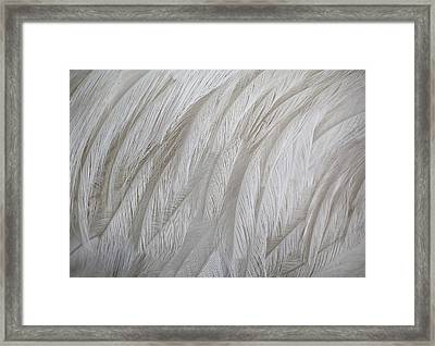 Emu Feathers Framed Print by Paulette Thomas