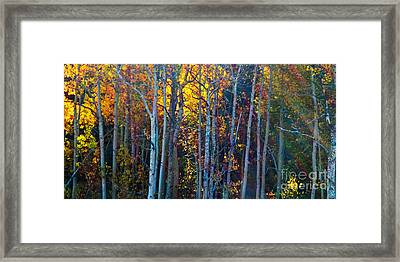 Enchanted Aspen Framed Print