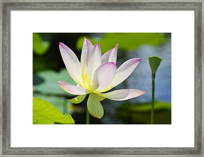 Enchanted Beauty Framed Print