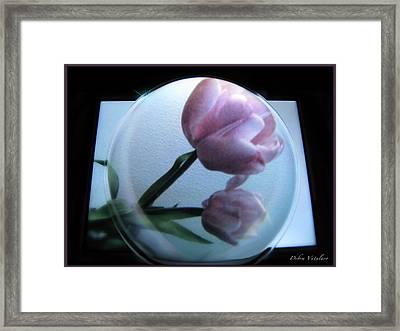 Enchanted Bubble Framed Print by Debra     Vatalaro
