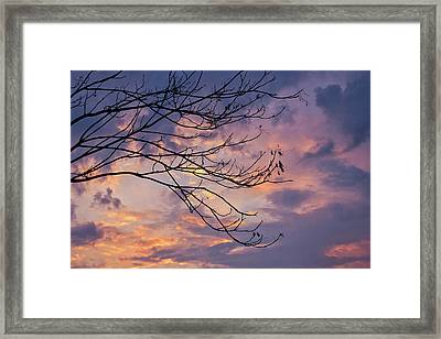 Enchanted Evening Framed Print by Rachel Cohen
