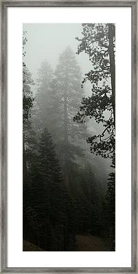 Enchanted Forest Cropped Framed Print