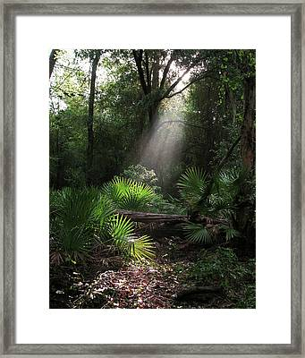Enchanted Forest Framed Print by Peg Urban
