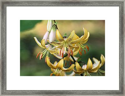 Enchanted Framed Print by Katherine White