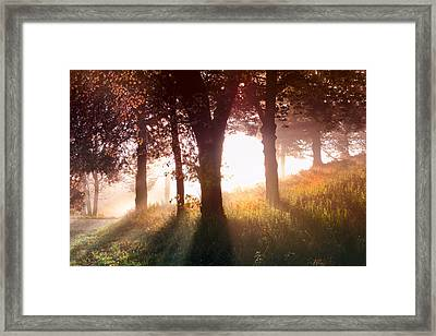 Enchanted Meadow Framed Print