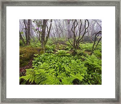 Enchanted Woodland Forest In Fog Blue Ridge Parkway In North Carolina Framed Print by Bill Swindaman