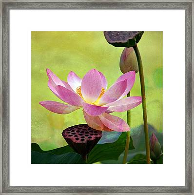 Enchantment Framed Print by Fraida Gutovich