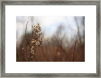 End Of Autumn Framed Print by Brady D Hebert