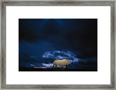 Endangered Northern White Rhinoceros Framed Print by Michael Nichols