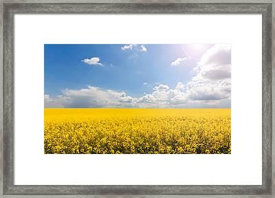Endless Yellow Canola Field Framed Print by © Bjorn van der Meijs