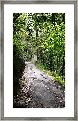 Enduring Path Framed Print by Michael Carrothers