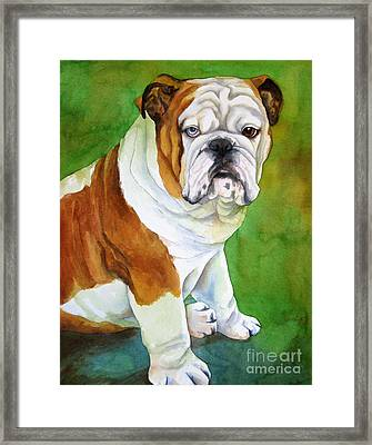 English Bull Dog Framed Print by Cherilynn Wood