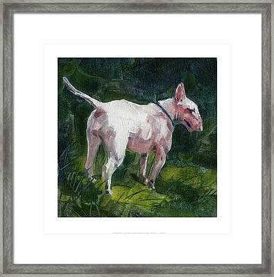 English Bull Terrier Framed Print by Chris Pendleton