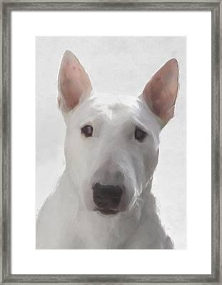 English Bull Terrier Framed Print by JG Keevil