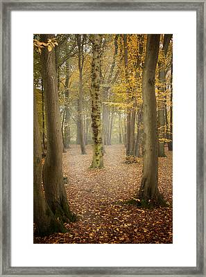 English Forest In Autumn Framed Print