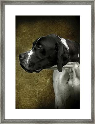 English Pointer Dog Portrait Framed Print