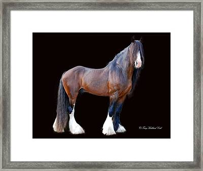 English Shire Study Framed Print by Terry Kirkland Cook