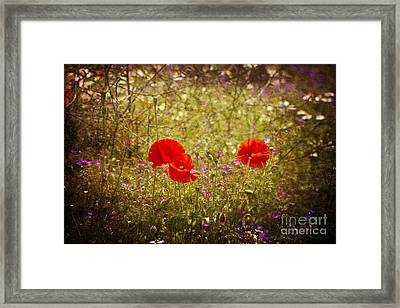 English Summer Meadow. Framed Print