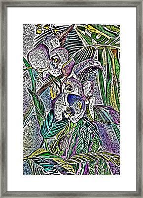 Engraved Orchids Framed Print