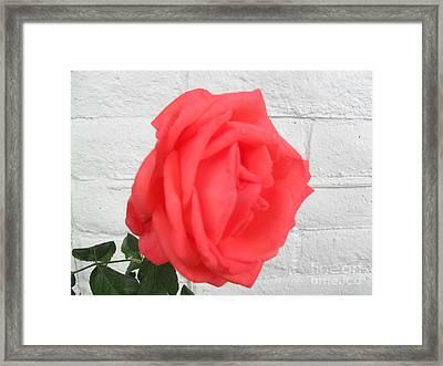 Enhanced Color Framed Print