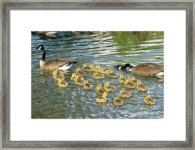 Enouth With The Fertility Pills Framed Print by Frank Townsley