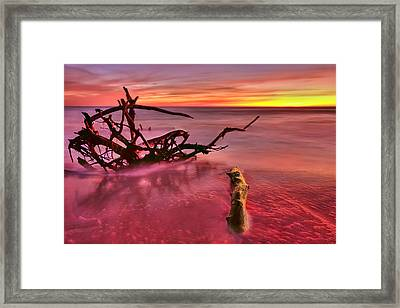 Entangled Framed Print by Evelina Kremsdorf