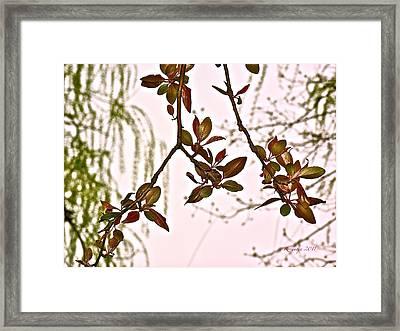 Entanglement II Framed Print by Rotaunja