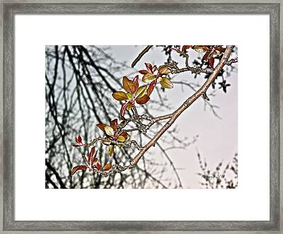 Entanglement IIi Framed Print by Rotaunja