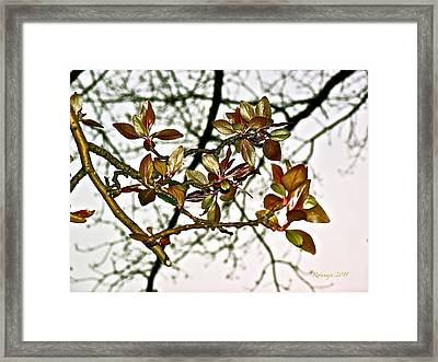 Entanglement Framed Print by Rotaunja