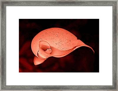 Envey Framed Print