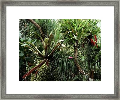 Epiphytic Bromelia Framed Print by Vaughan Fleming