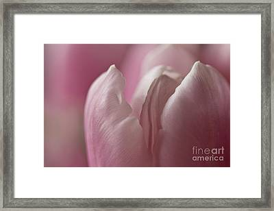 Erotic Bud Framed Print