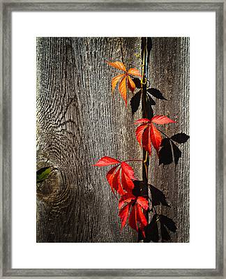 Escapee Framed Print