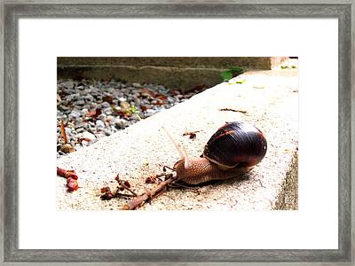 Escargot Framed Print