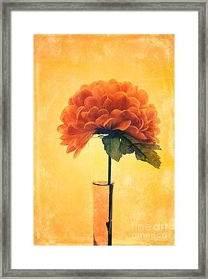 Estillo - 01i2t03 Framed Print by Variance Collections