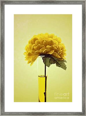 Estillo - S03-01q2 Framed Print by Variance Collections