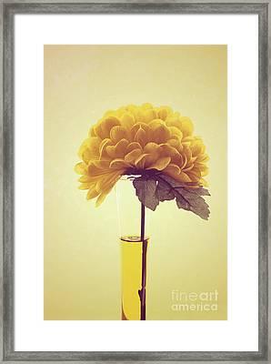 Estillo - S03-y01r Framed Print
