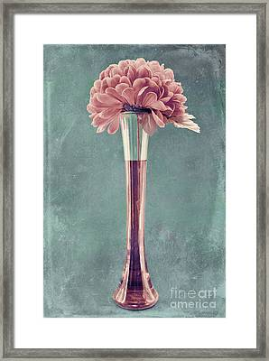 Estillo Vase - S01v4b2t03 Framed Print by Variance Collections